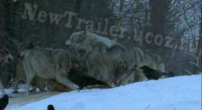 смотреть видео о животных: